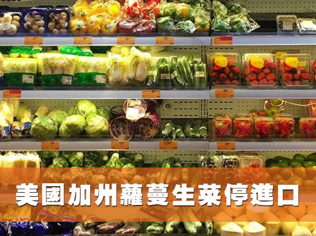美國加州蘿蔓生菜停進口