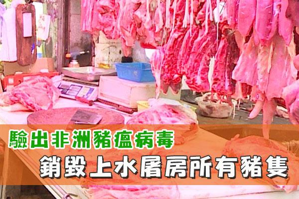 驗出非洲豬瘟病毒 銷毀上水屠房所有豬隻